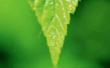 Green Week 2019
